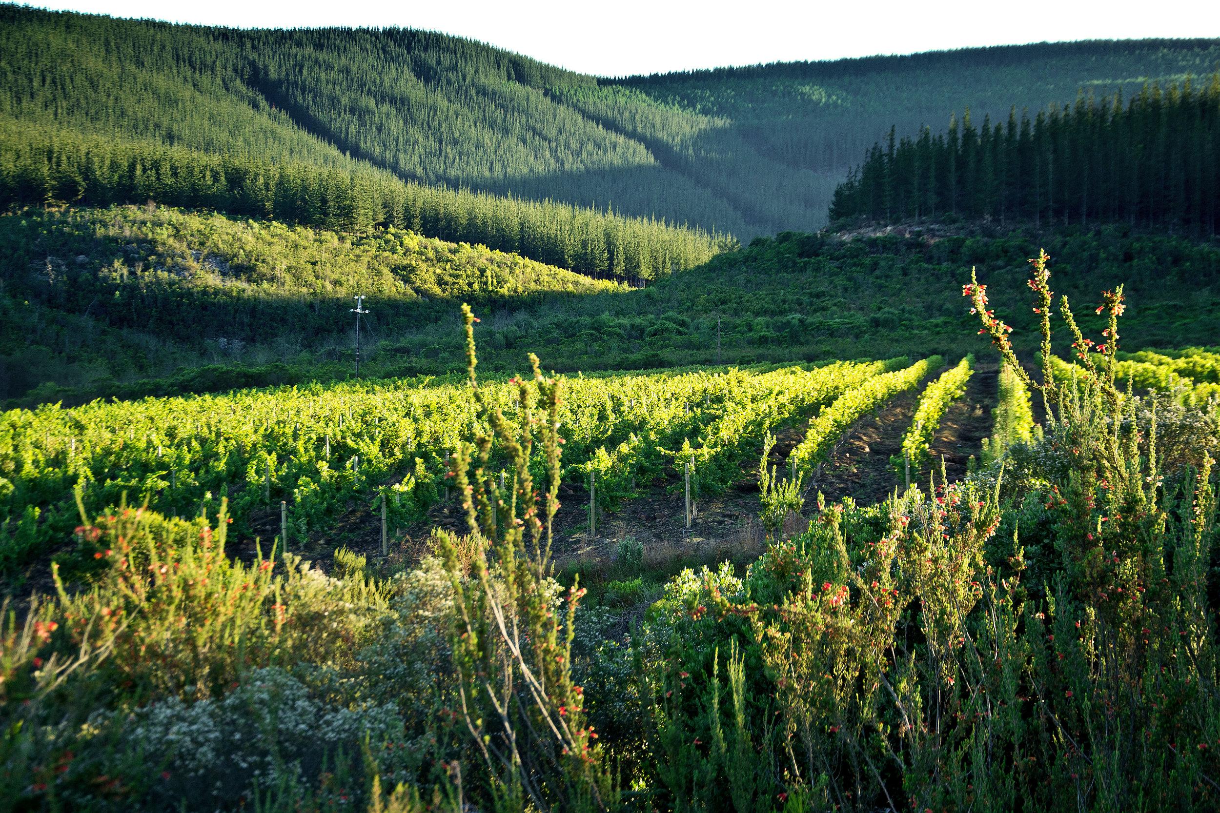 Forest & Vines.jpg