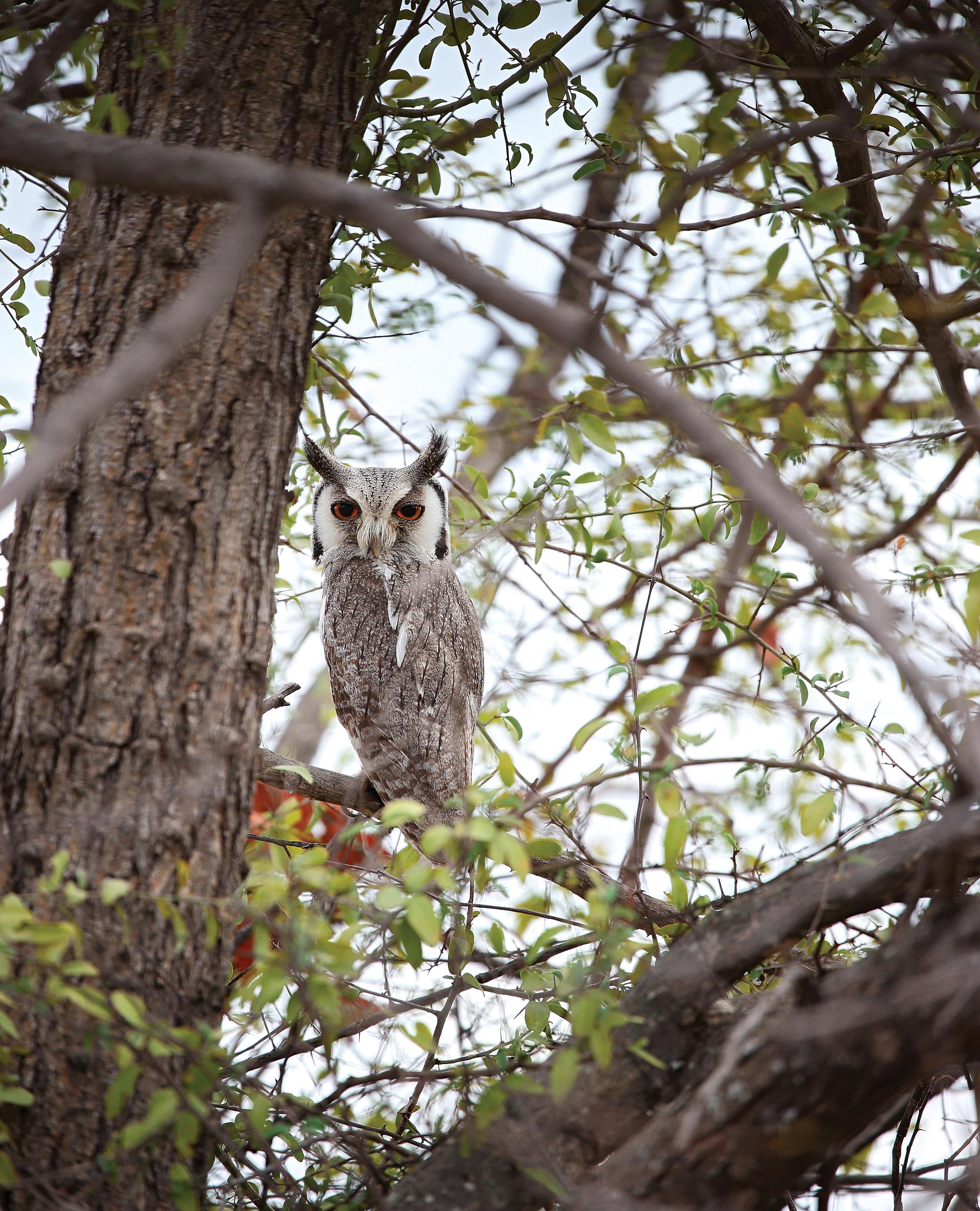 outpost_wh_facd_owl.jpg