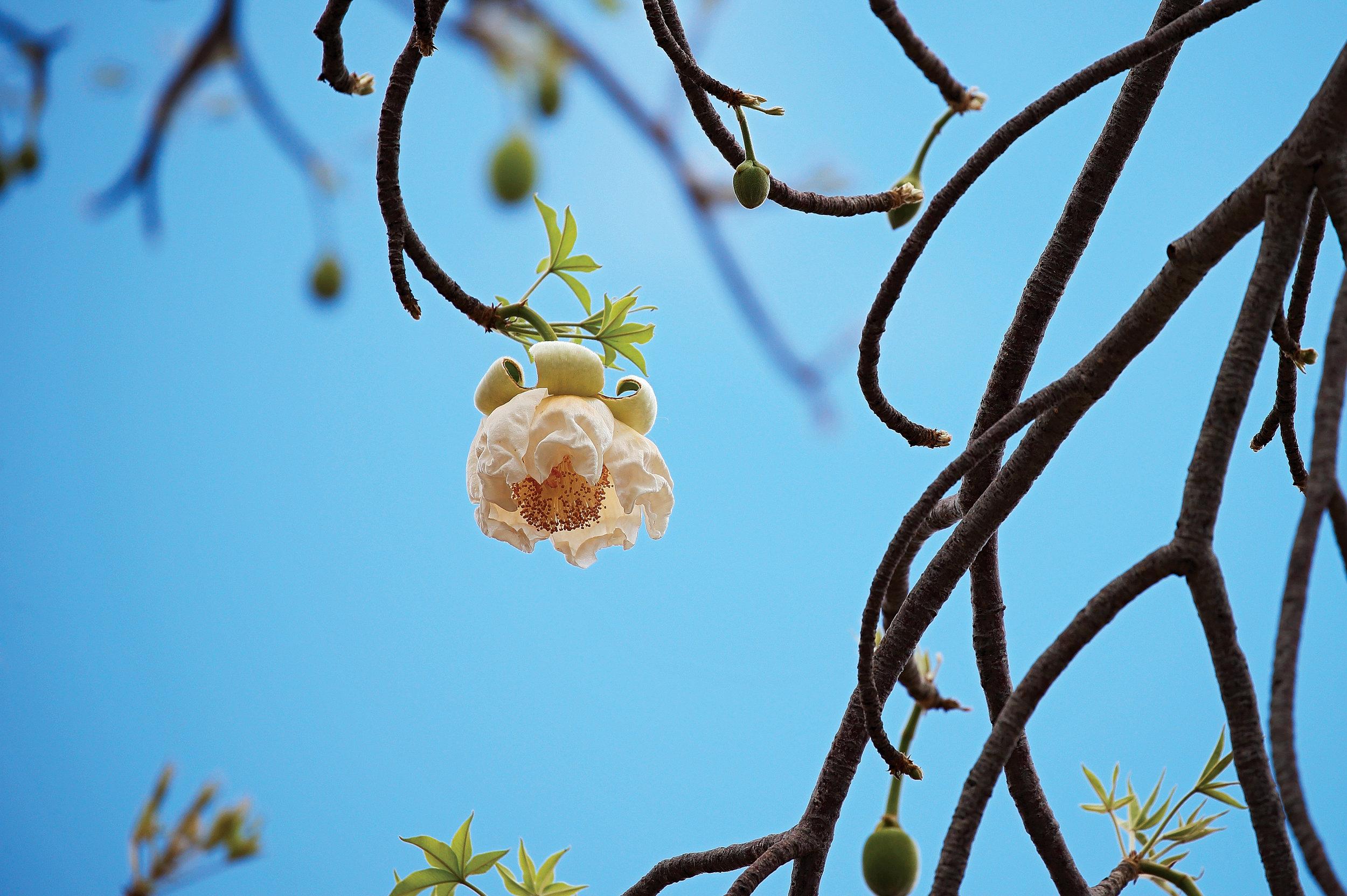 outpost_baobab1.jpg