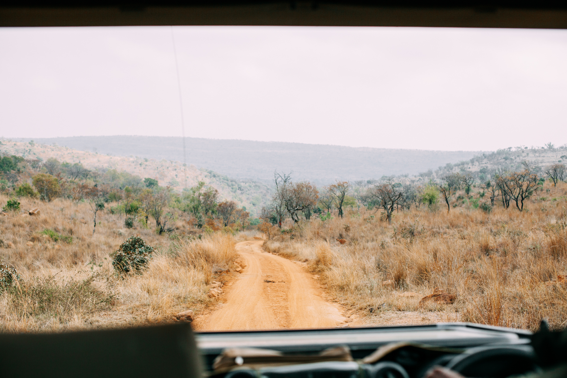 AFRICAN ADVENTURE: There's nothing like being surrounded by bush for miles, as far as the eye can see. I can understand why people say that Welgevonden is such a special place!