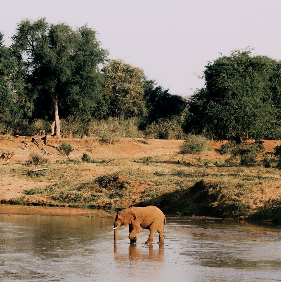 Our afternoon game drives are always the best opportunity to get that perfect golden hour shot. We love this shot by   @lea_crafford   of a herd of elephants cooling off in the river after a hot day.