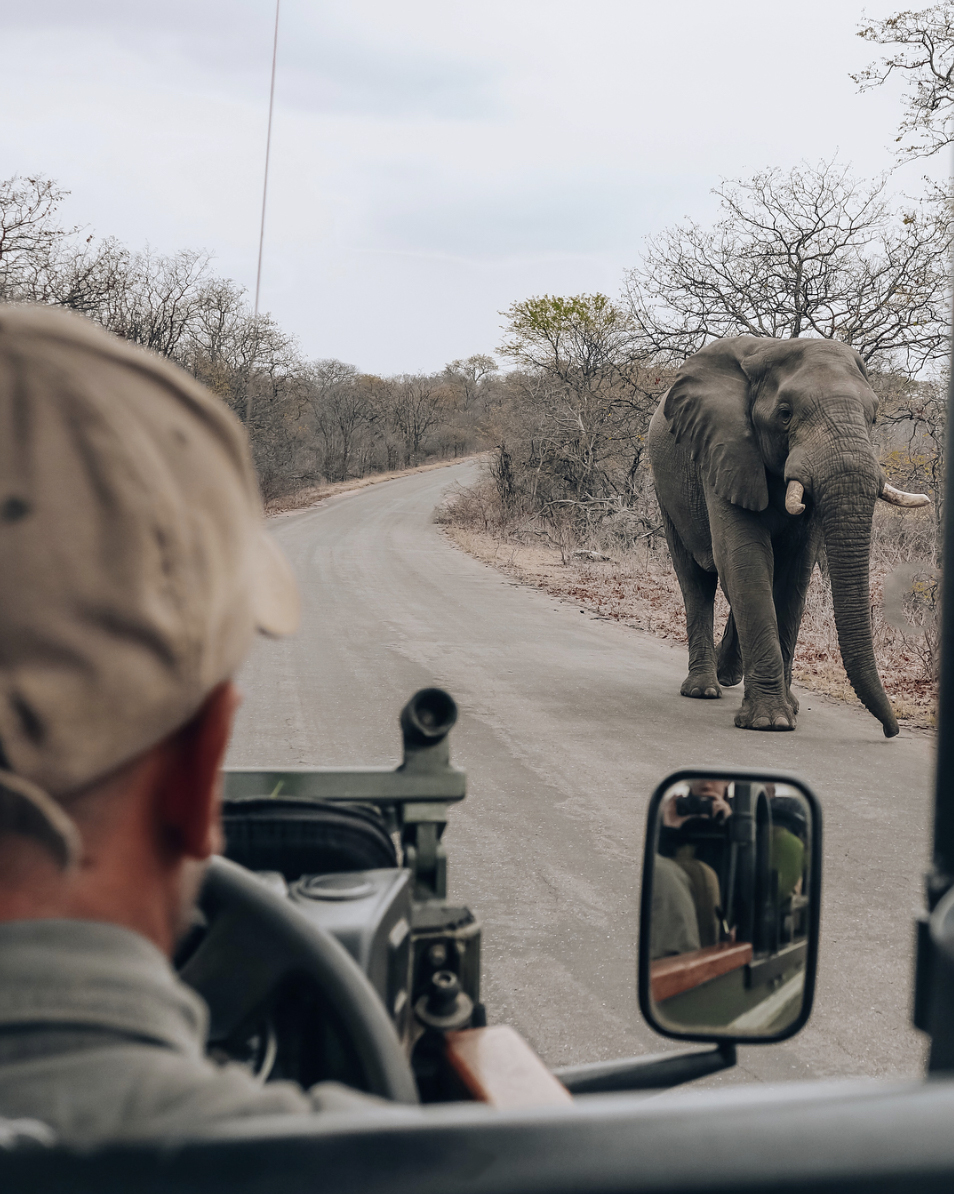 A different type of road block.   @sarahs.trek   came across two elephants tearing down branches for their post-breakfast snack on her morning game drive. Magnificent elephant sightings abound here at The Outpost Lodge.