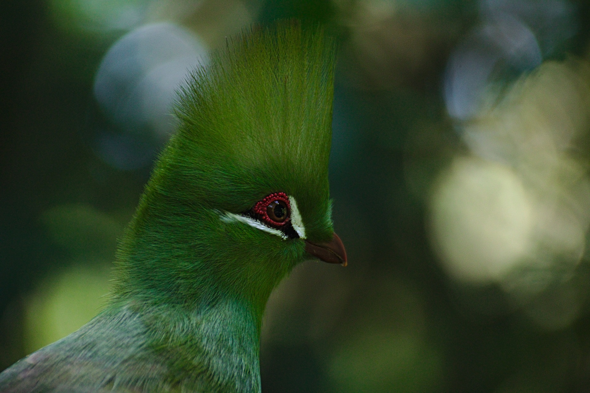bird-3561871_1920.jpg