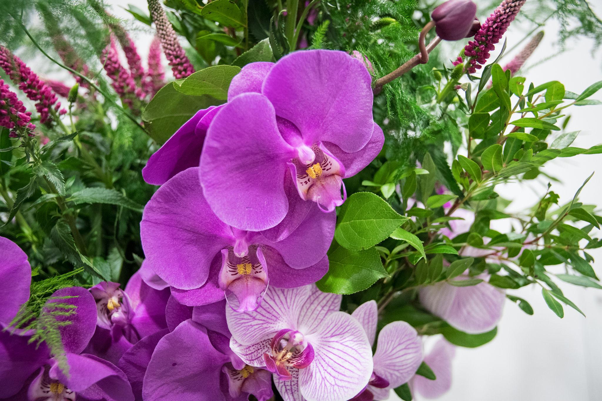 Flora Symbolica Fringe 2019.jpg