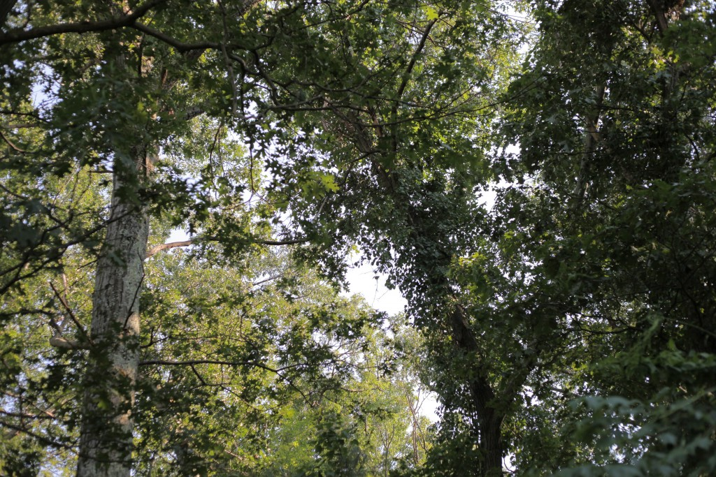 tree care in wappingers and hopewell junction ny