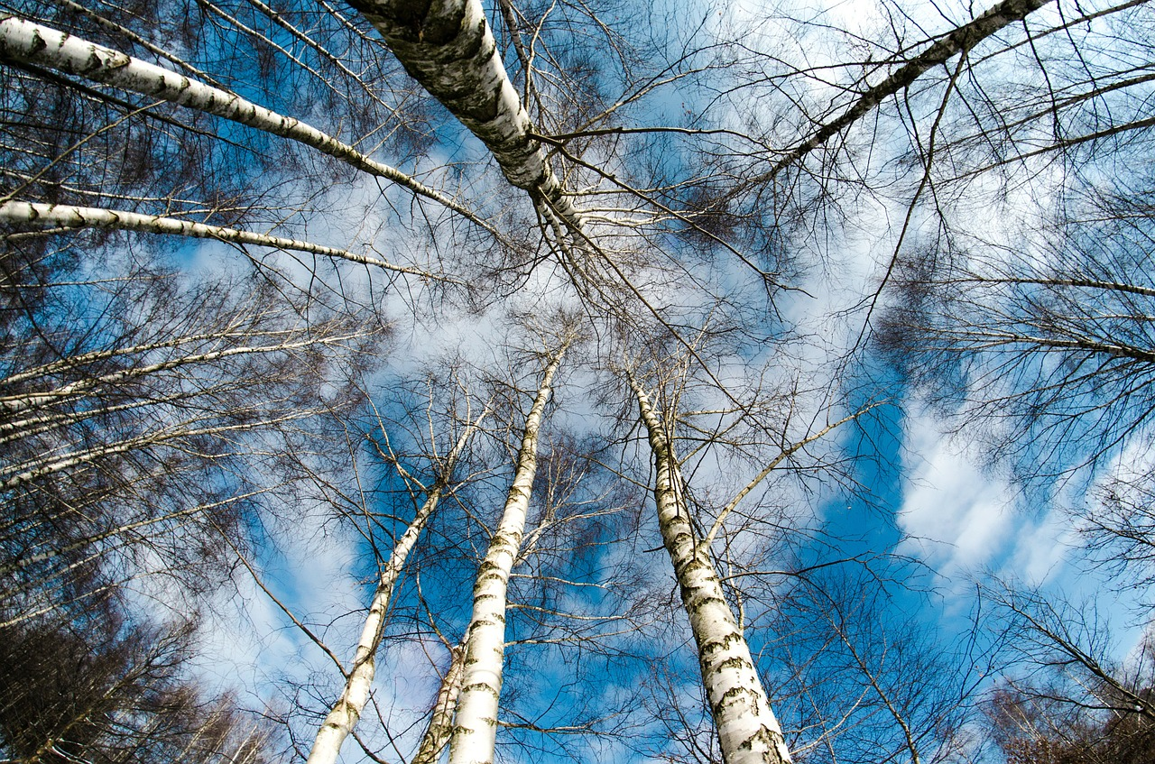Should You Bother With An Arborist In Winter in Poughquag NY?