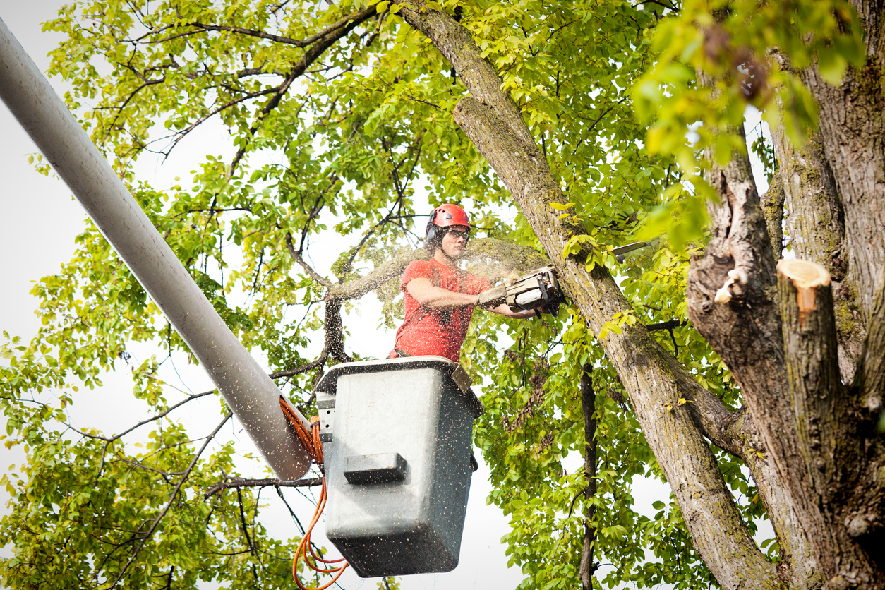 Why You Should Invest in a Regular Professional Tree Service Plan Hudson Valley NY