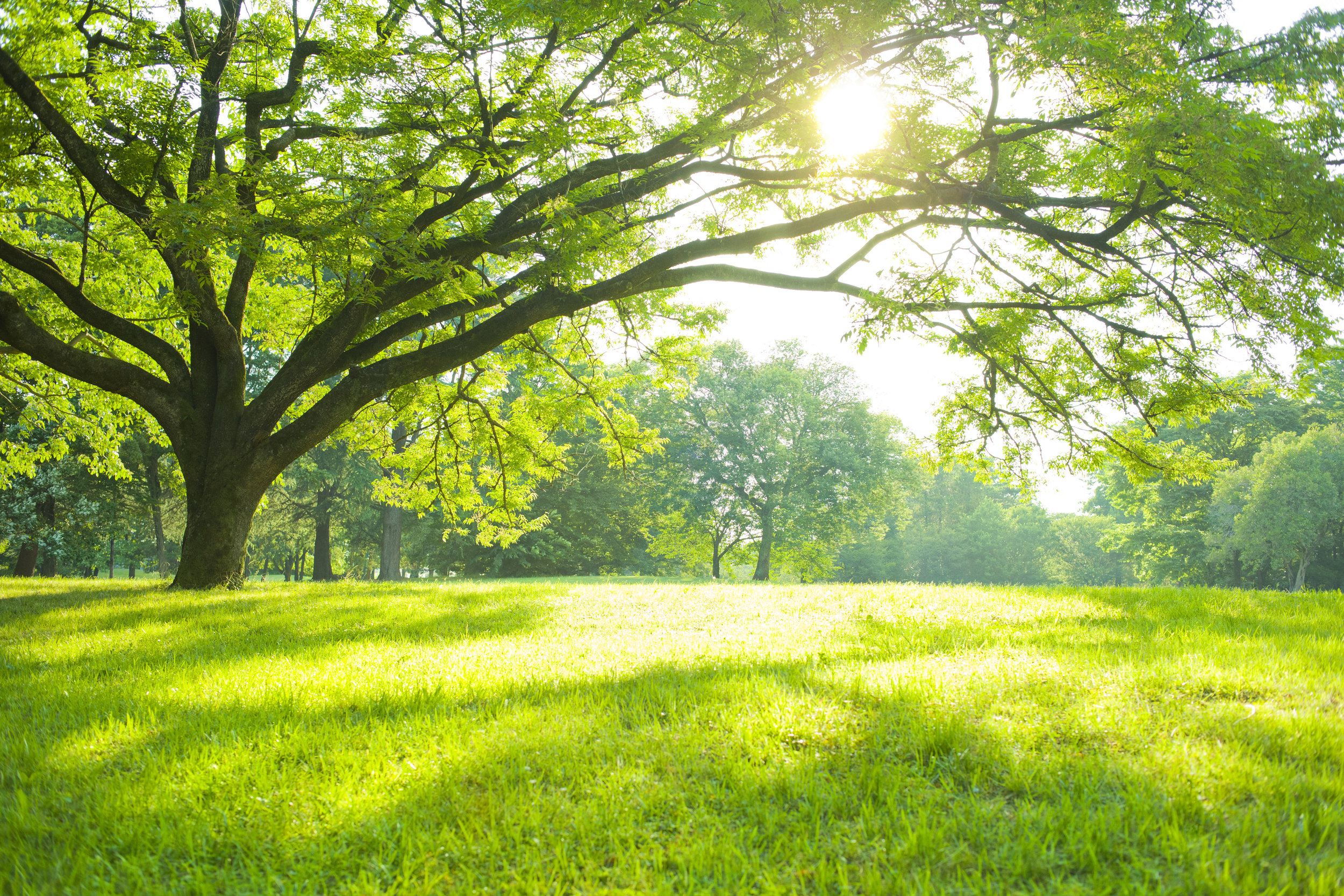 Qualities to Look for When Scouting Lawn Fertilizer Companies in Fishkill, NY