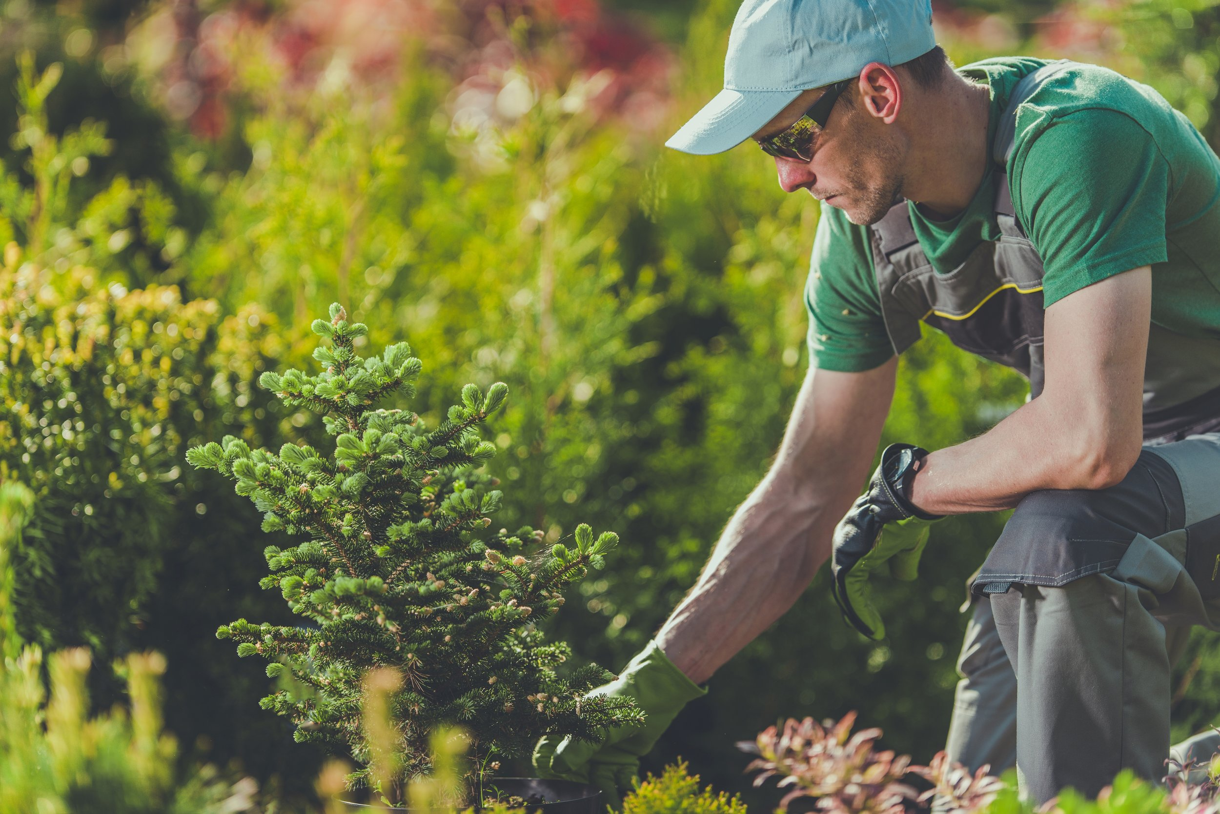 Benefits of Deep Root Fertilization for Your Pleasant Valley, NY, Landscape