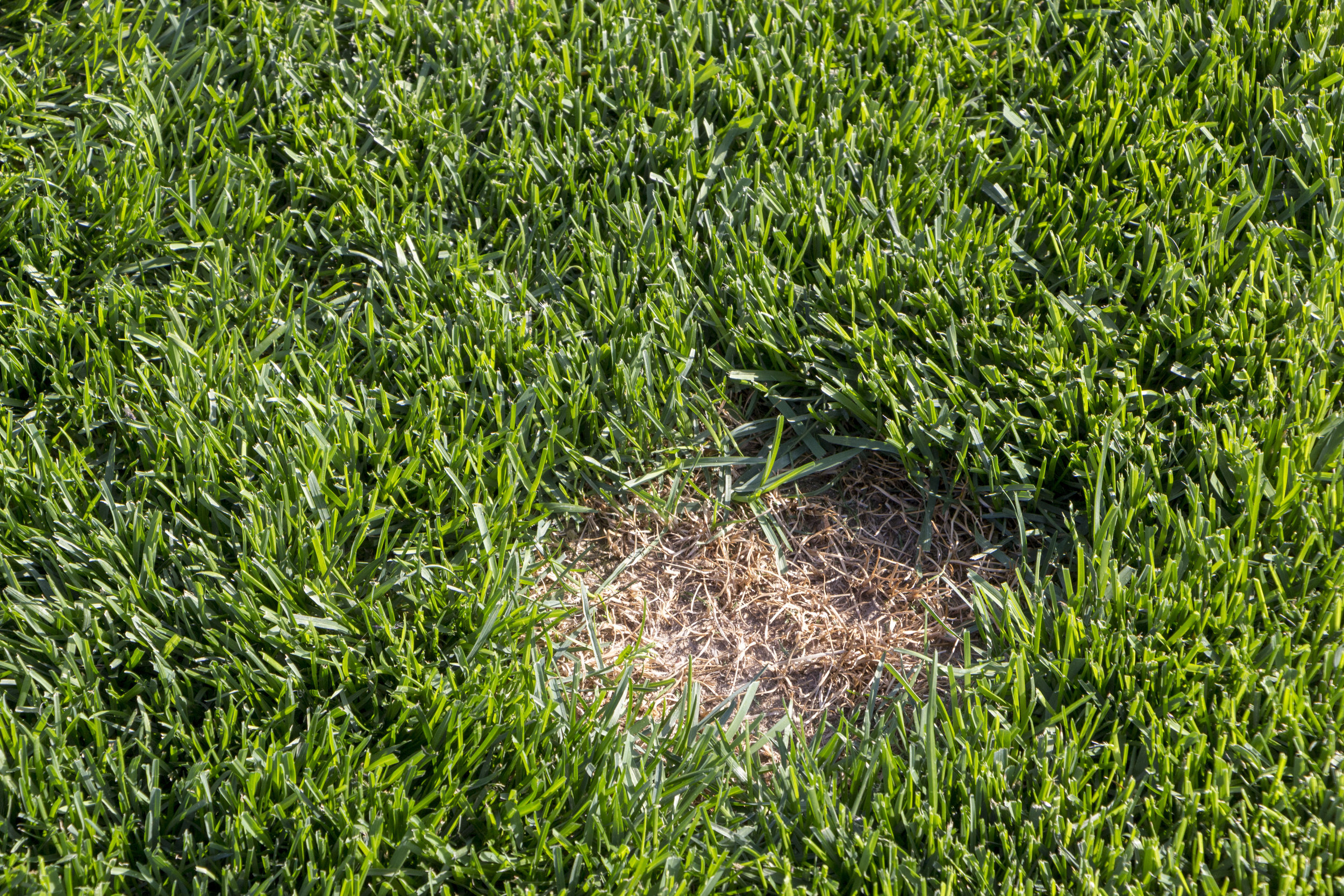 What Causes Brown Spots in a Lawn?