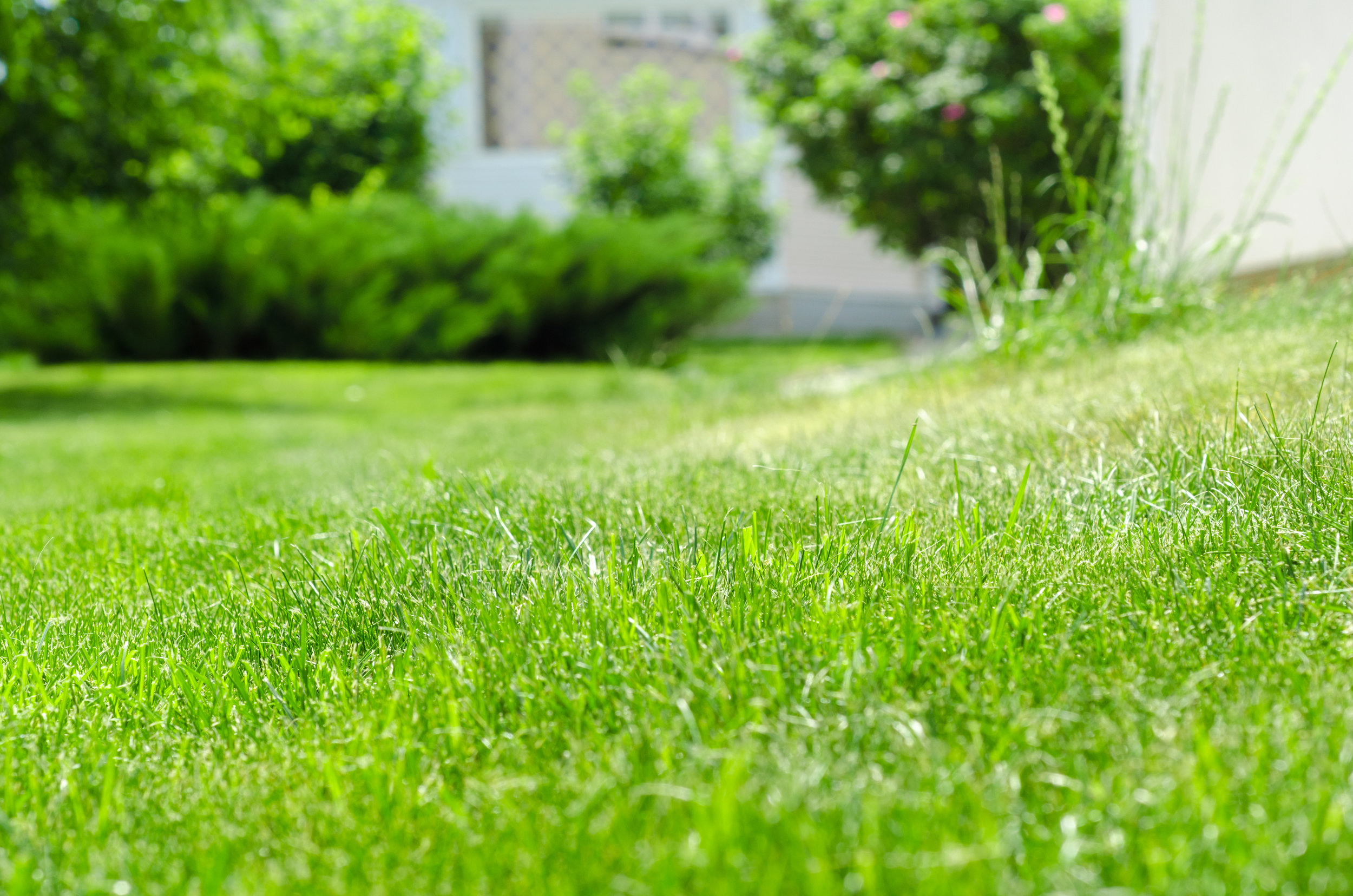 How to Get Rid of Crabgrass on Your Wappingers Falls, NY Lawn
