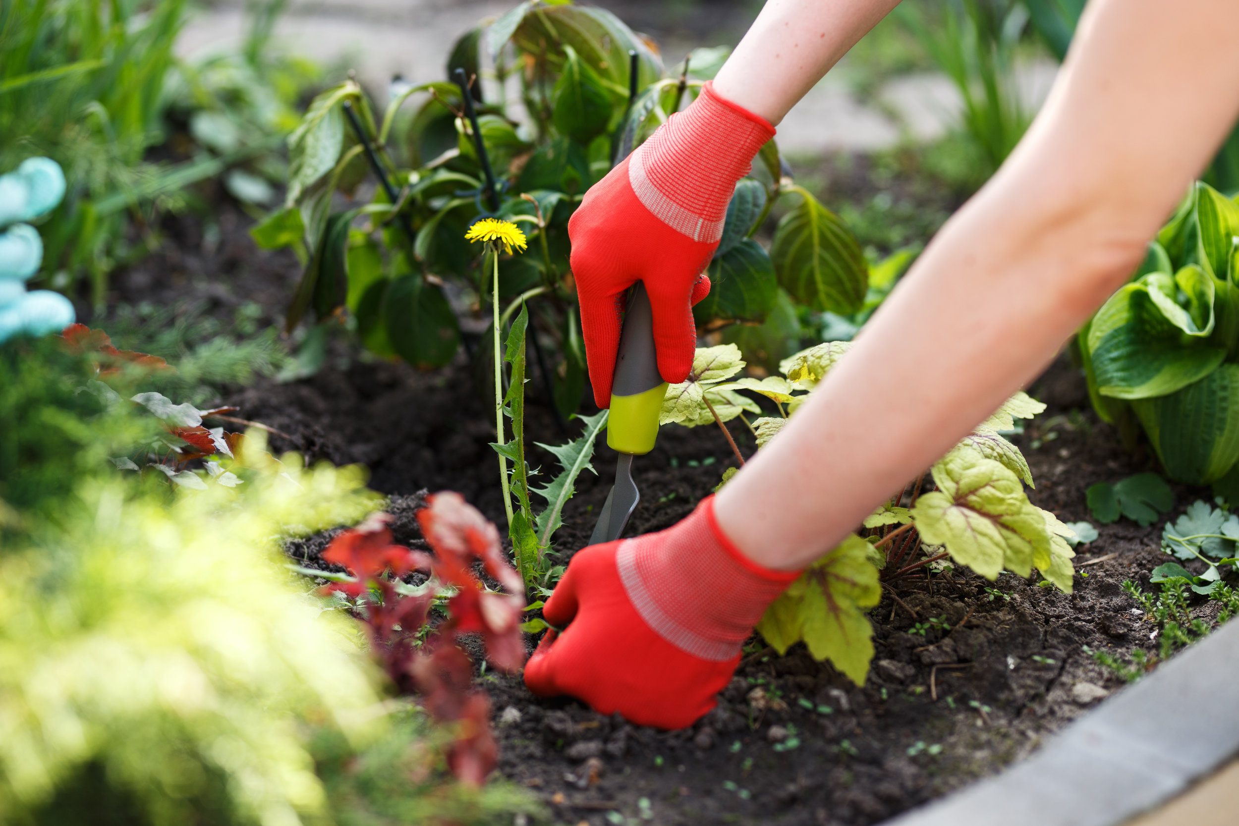 4 Essential Weed Killer Tips for the Fall