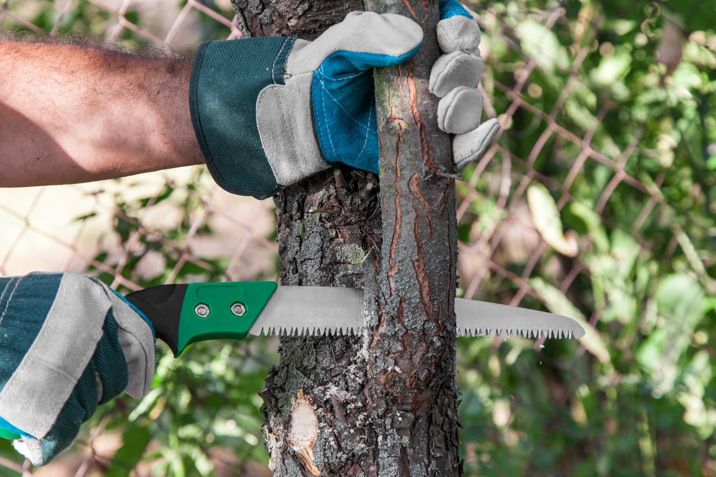 Tree Service in Late Fall: To Prune or Not to Prune?