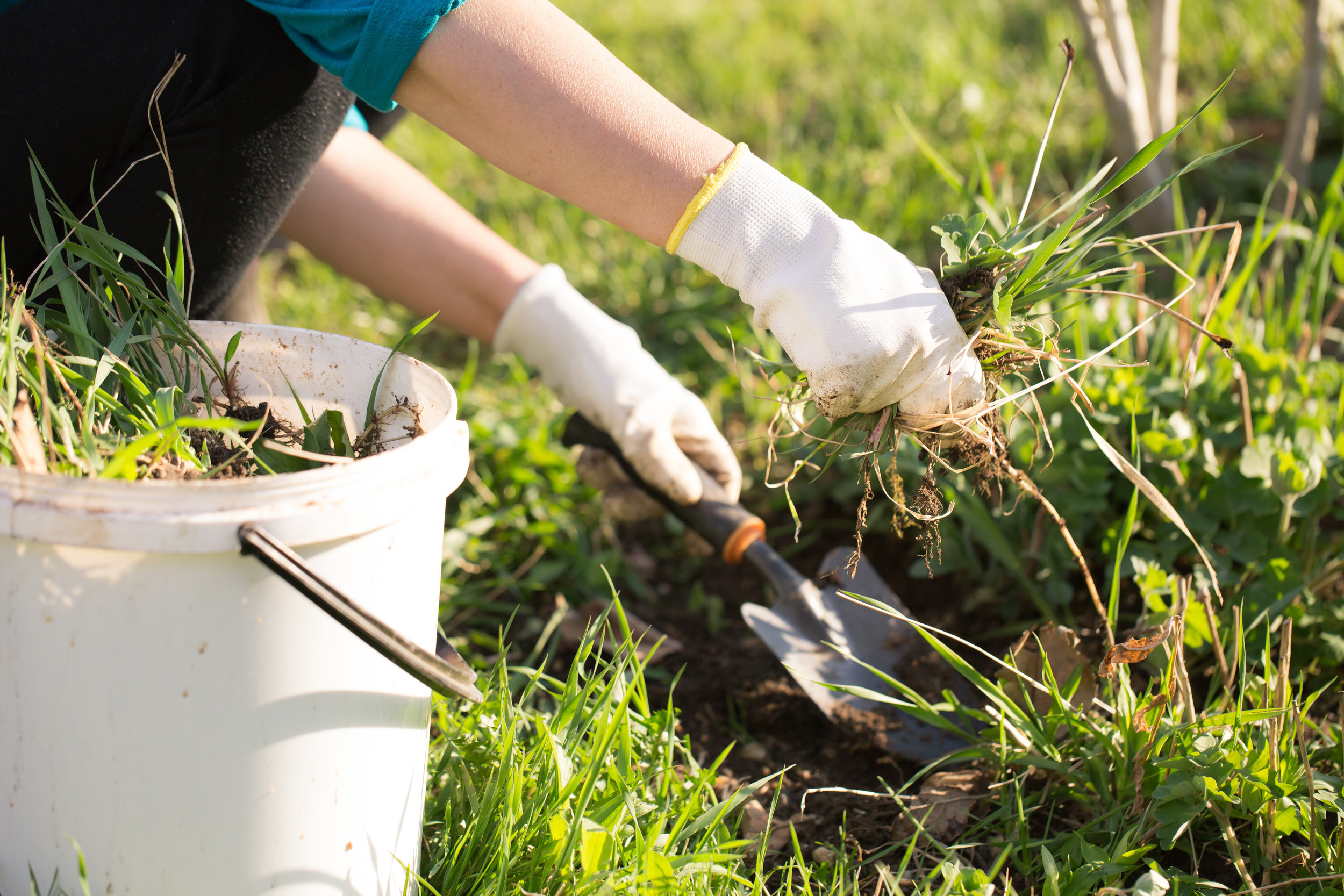 7 Things You Should Know About Lawn Weed Killer and Control Service in Poughkeepsie, NY