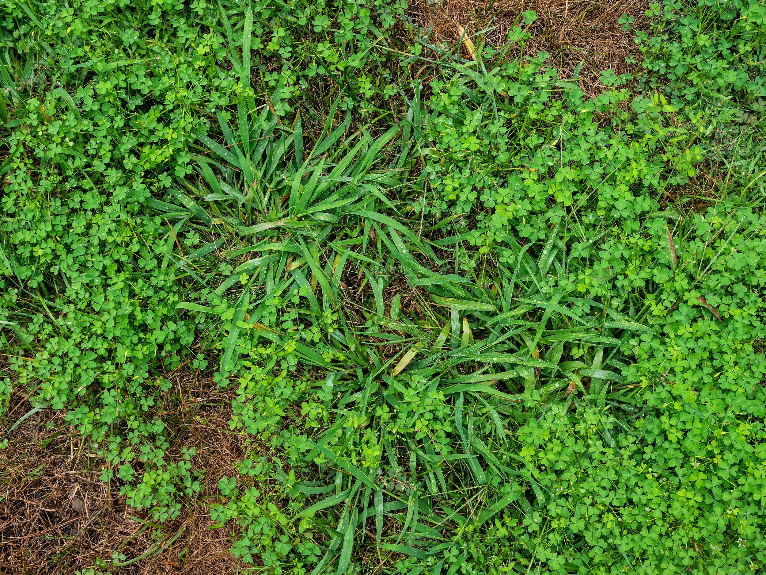 Is Crabgrass Really That Bad in Westchester, NY