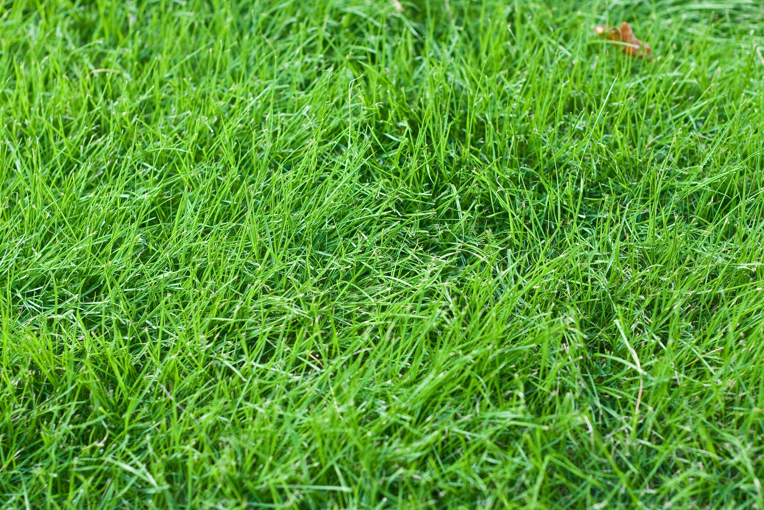 Fertilization of Cool-Season Lawns in Lagrangeville, NY