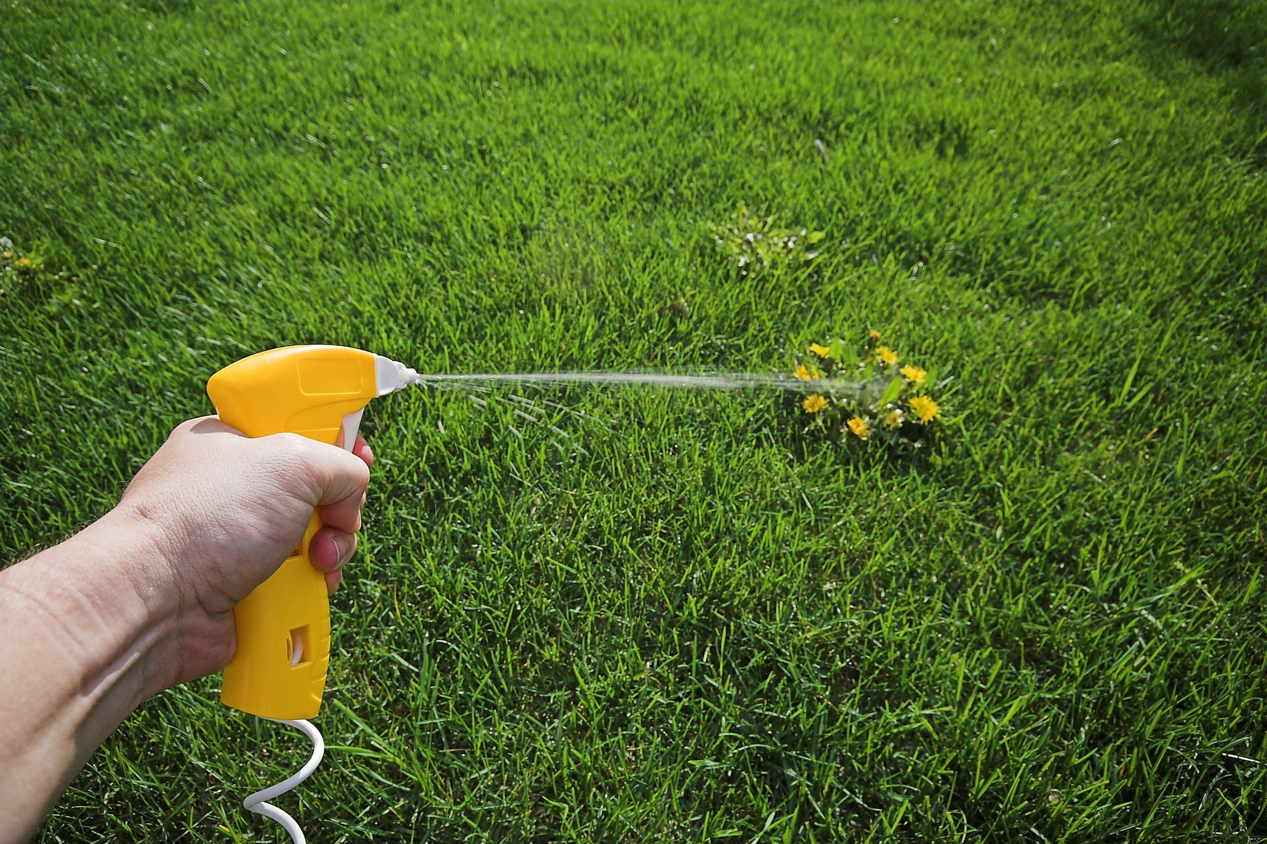 4 Secrets About Weed Killer from a Landscaper in Pleasant Valley, NY