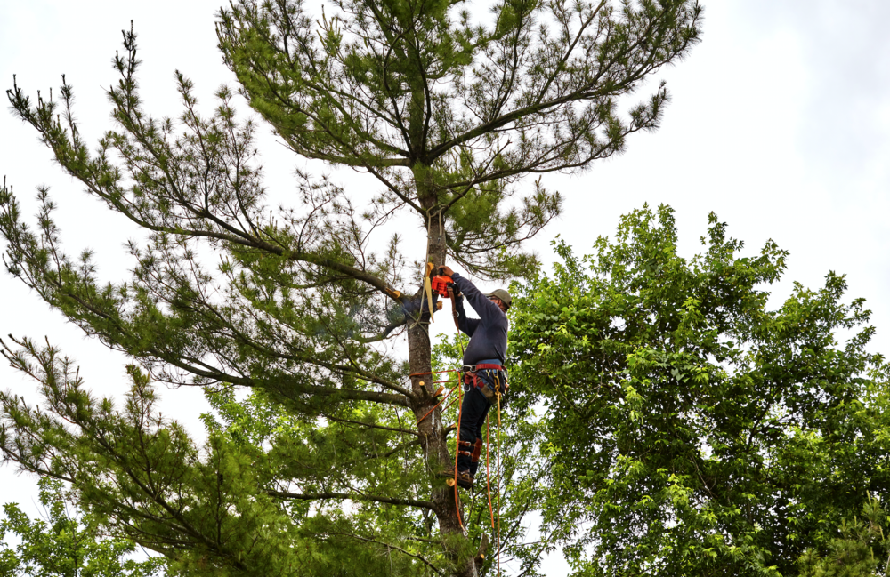 Commercial landscaping with tree service in Westchester County NY