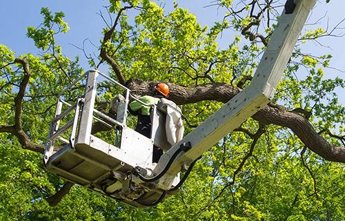 Arborist Lagrangeville, New York - tree service