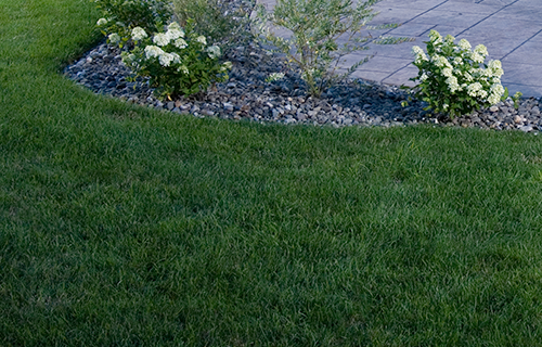 Fertilization and commercial maintenance in Westchester County NY