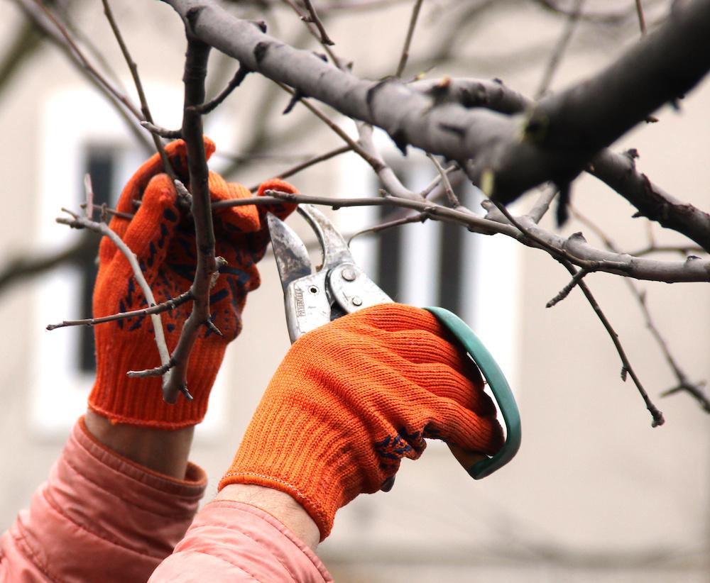 Putnam County, NY tree service, commercial maintenance