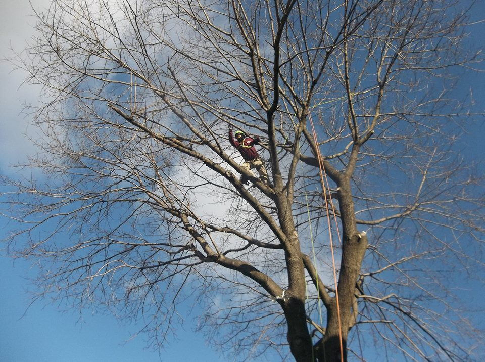 Commercial maintenance, tree service in Westchester County, NY