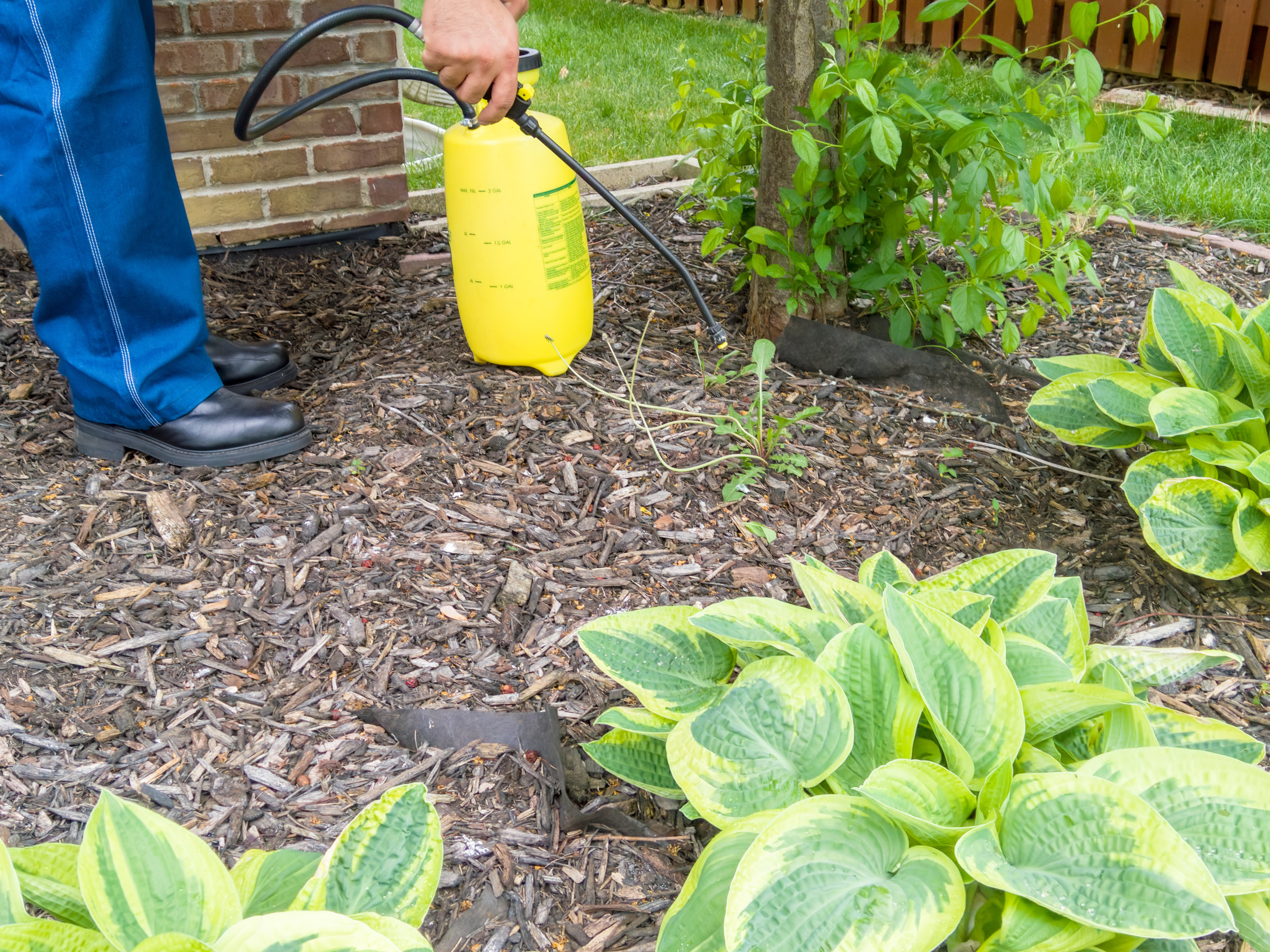 Why You Should Avoid Store-Bought Weed Killer in Poughkeepsie, NY