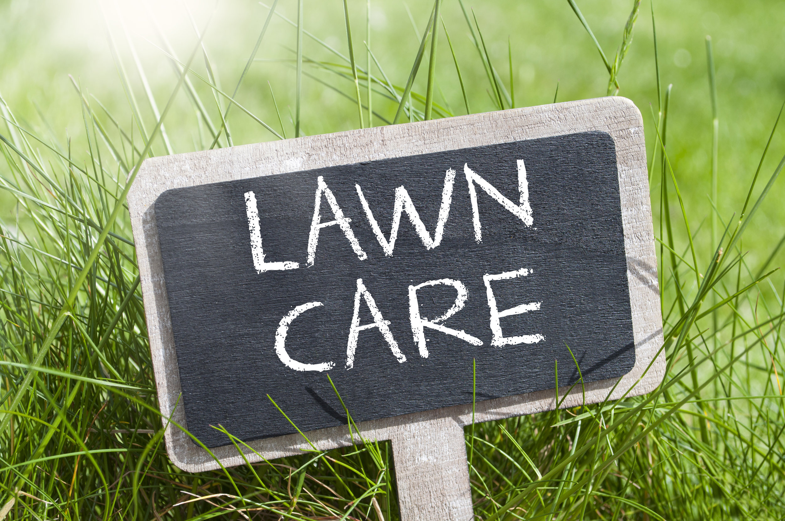 Landscaping Tips to Combat the Summer Heat and How We Can Help in Pleasant Valley, NY