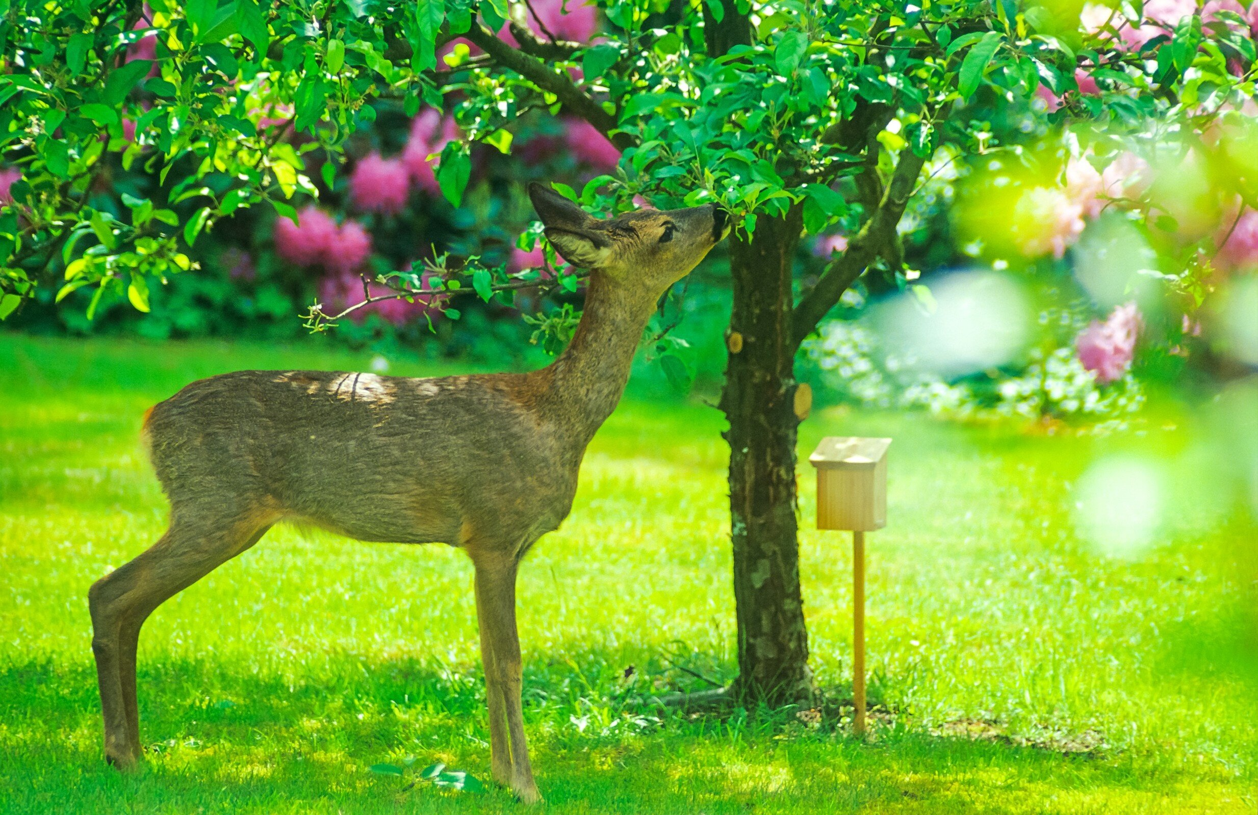 Lawn Treatment Options to Keep Common Pests Away in Poughkeepsie, NY