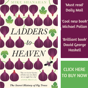 Ladders To Heaven ad.png