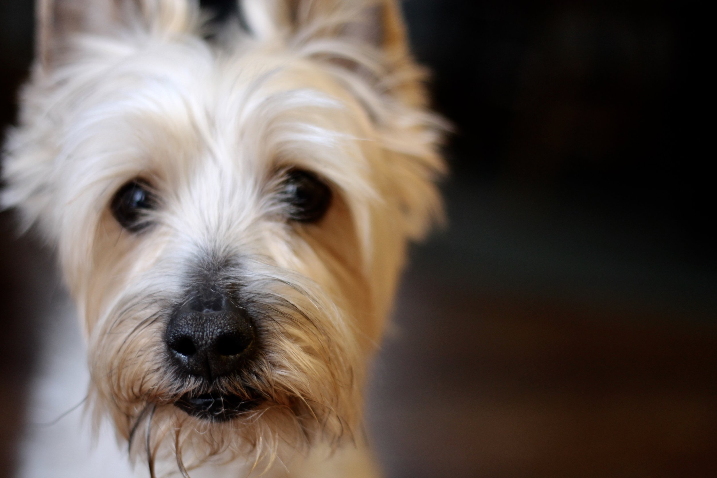 The dog is a perfect portrait subject. He doesn't pose. He isn't aware of the camera.  ~ Patrick Demarchelier