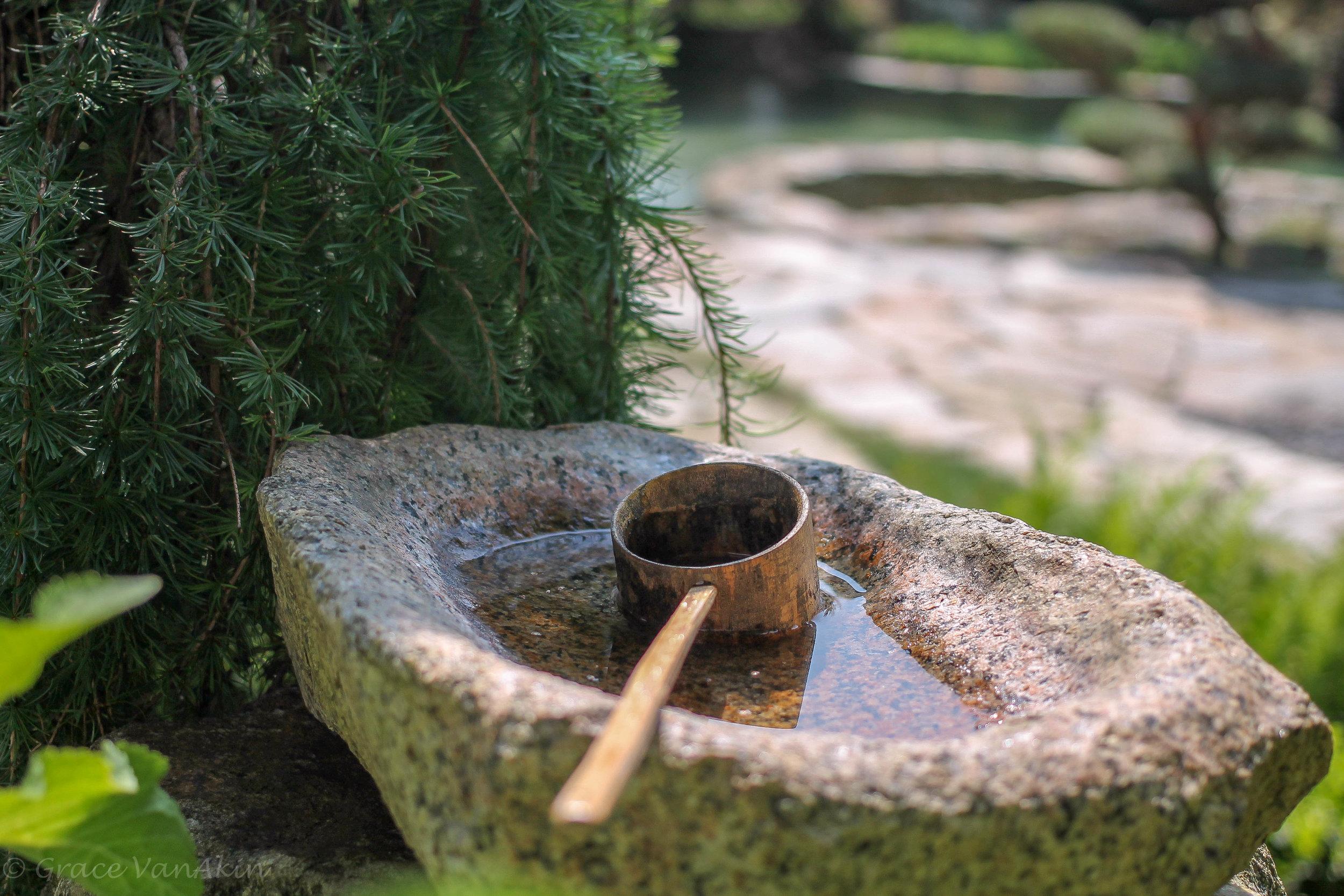Japanese Garden (7 of 19).jpg