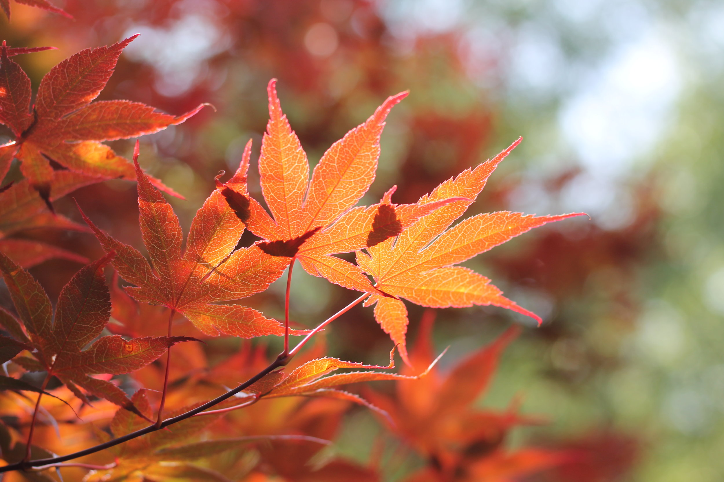 """""""No spring nor summer beauty hath such grace as I have seen in one autumnal face…"""" ~John Donne,  The Autumnal"""