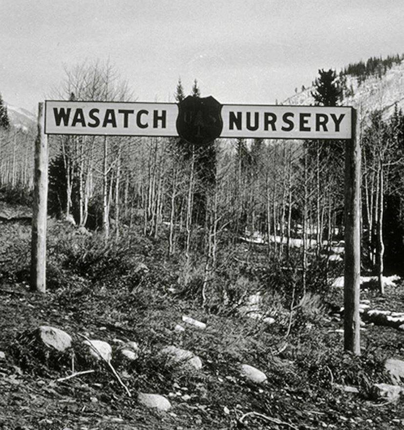 Wasatch Nursery2- 1906-1920.jpg
