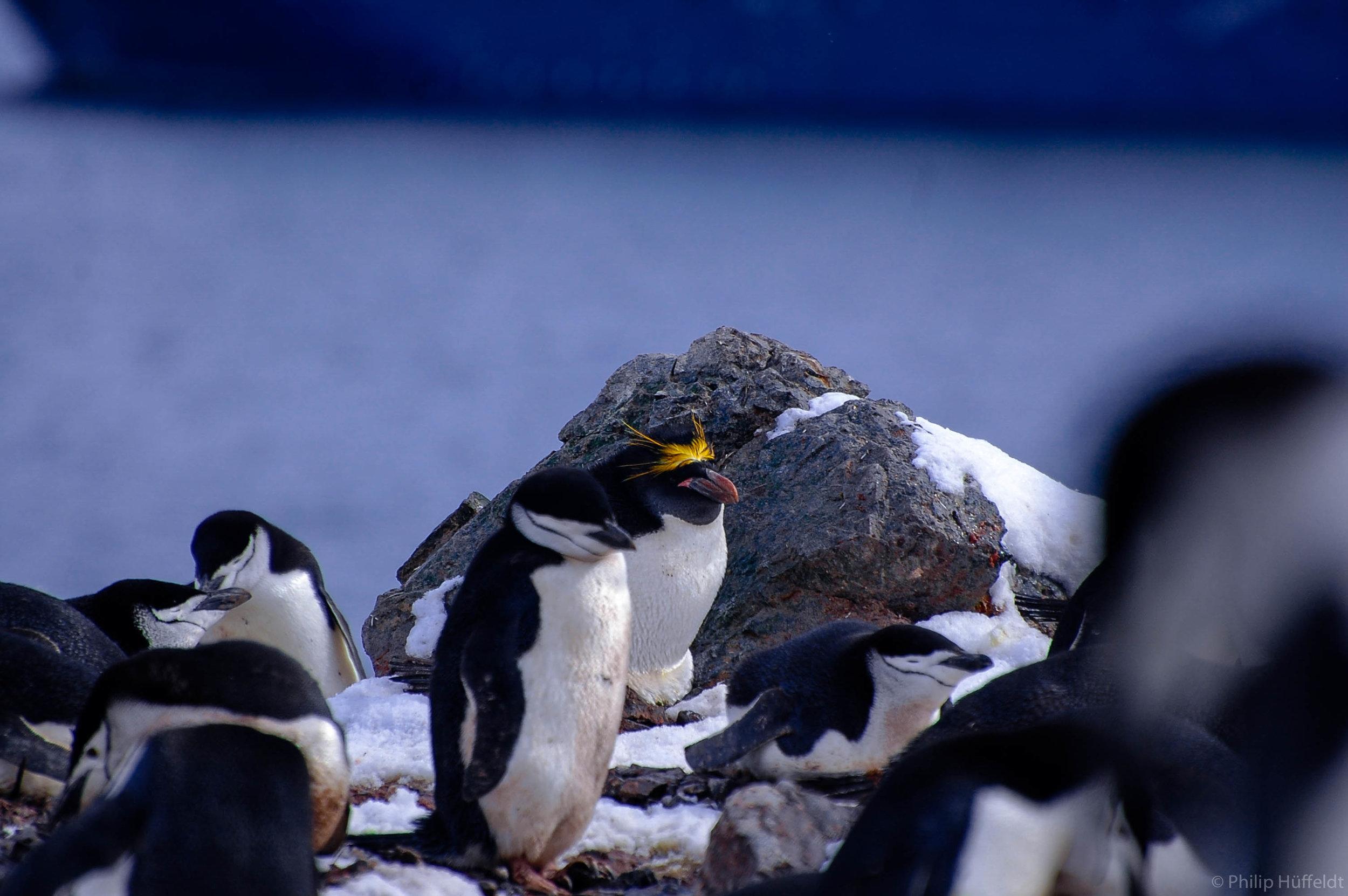 Antartica Penguin.jpg