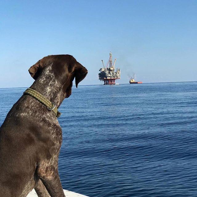 Man's best friend. . . . . . . . #fishing #fish #fishlife #doglife #dogs #dogsofinstagram #instafish #sealife #boats #wednesdaymotivation #boatlife #instafishing #gonefishing #strength #bait #dredge