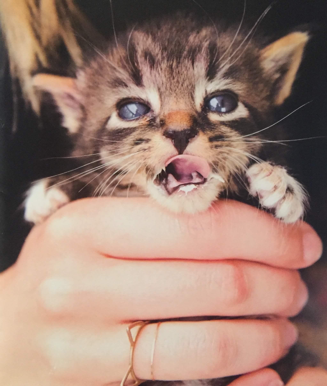 Kitten Lady.JPG