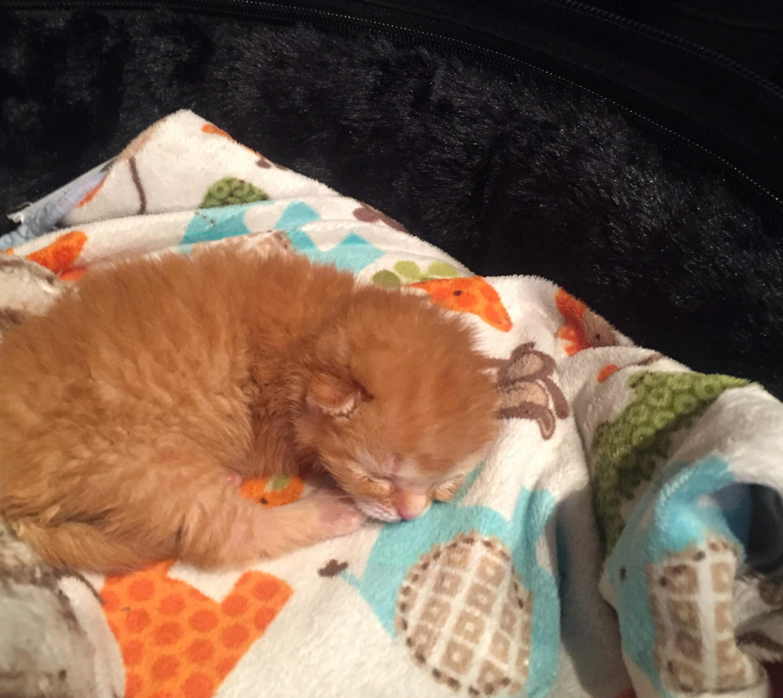 Kitten The Kitten Lady.JPG