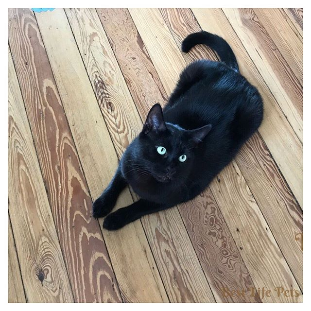September is Happy, Healthy Cat Month! Time to schedule your vet checkup! Check out the link in our bio to read all about what makes us happy and healthy every month! #happycat #healthycat #september #veterinarian #checkup #catsagram #blackcatsruletheworld #blackcatsrock