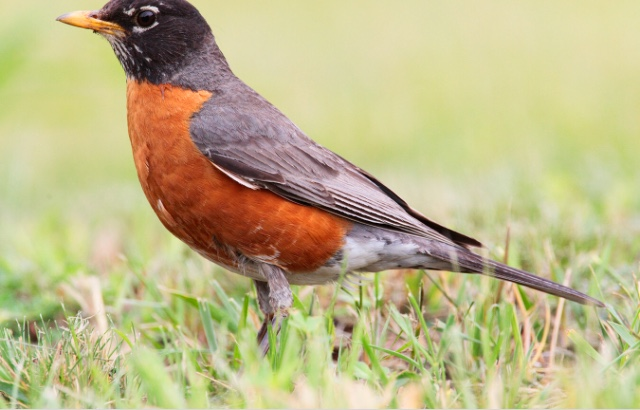they always seem to know something. I am convinced ones I've lost have been reborn as robins.