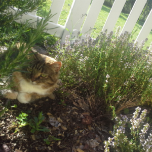 catthyme