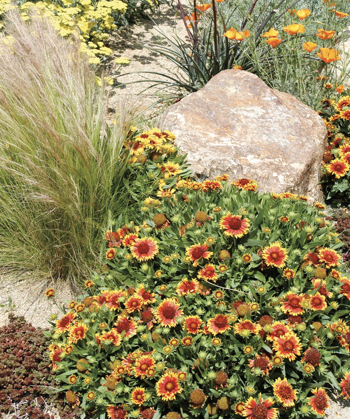 Abundance of flowering perennials