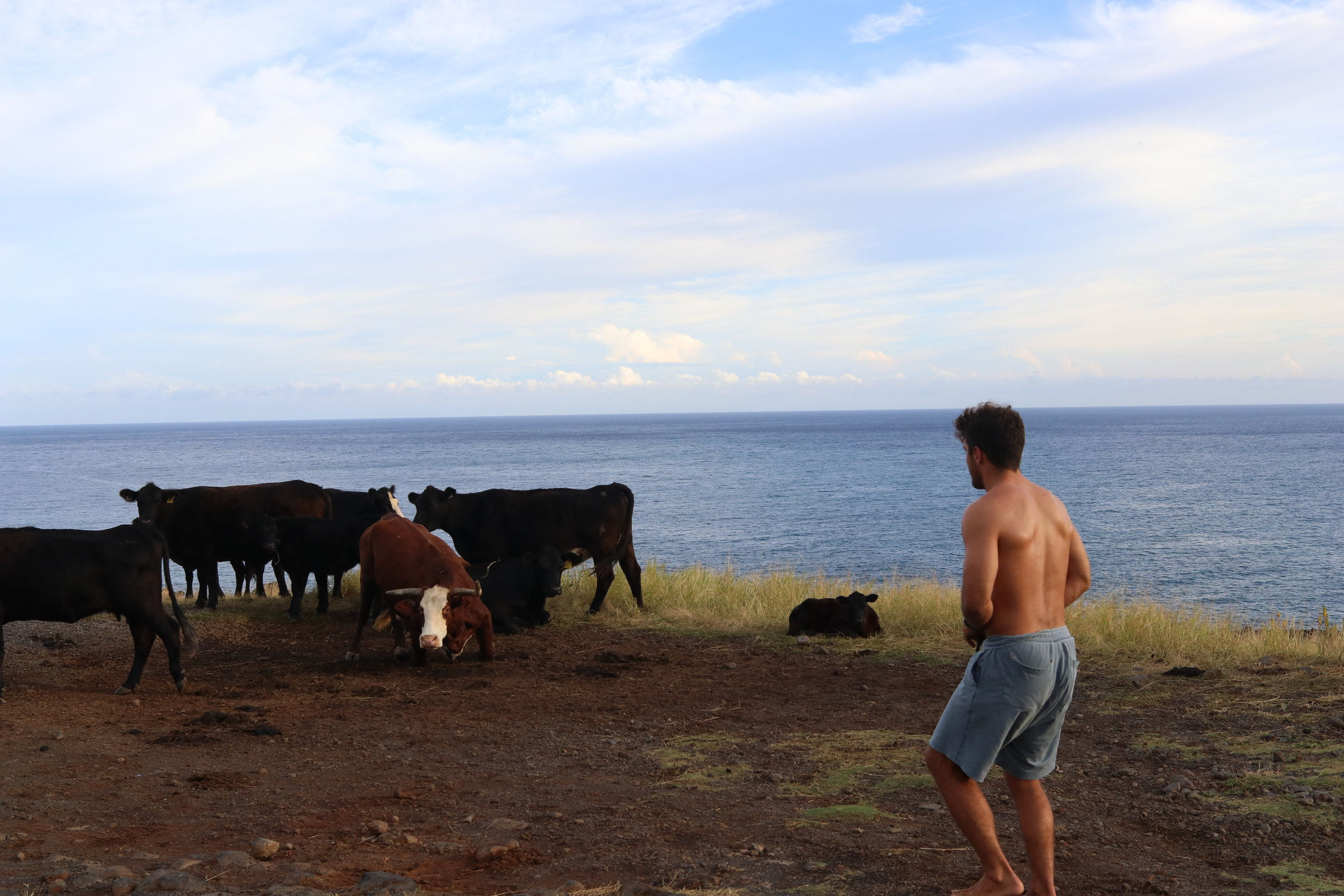 Turns out you should not approach a group of cattle when there is young calf around. T-Bone VS. T-Bone.