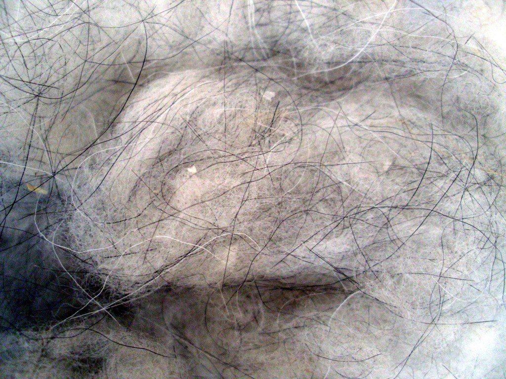 The long harsher strands of hairs are not considered real cashmere and among the fluffy ones each strand of hair has to be decided by color and measured to ensure see if it will be A,B or C Grade