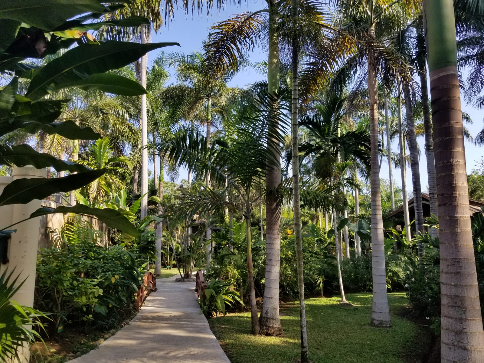 This is what you saw walking around the resort. Almost zero people, beautiful foliage and you could even hear the insects!