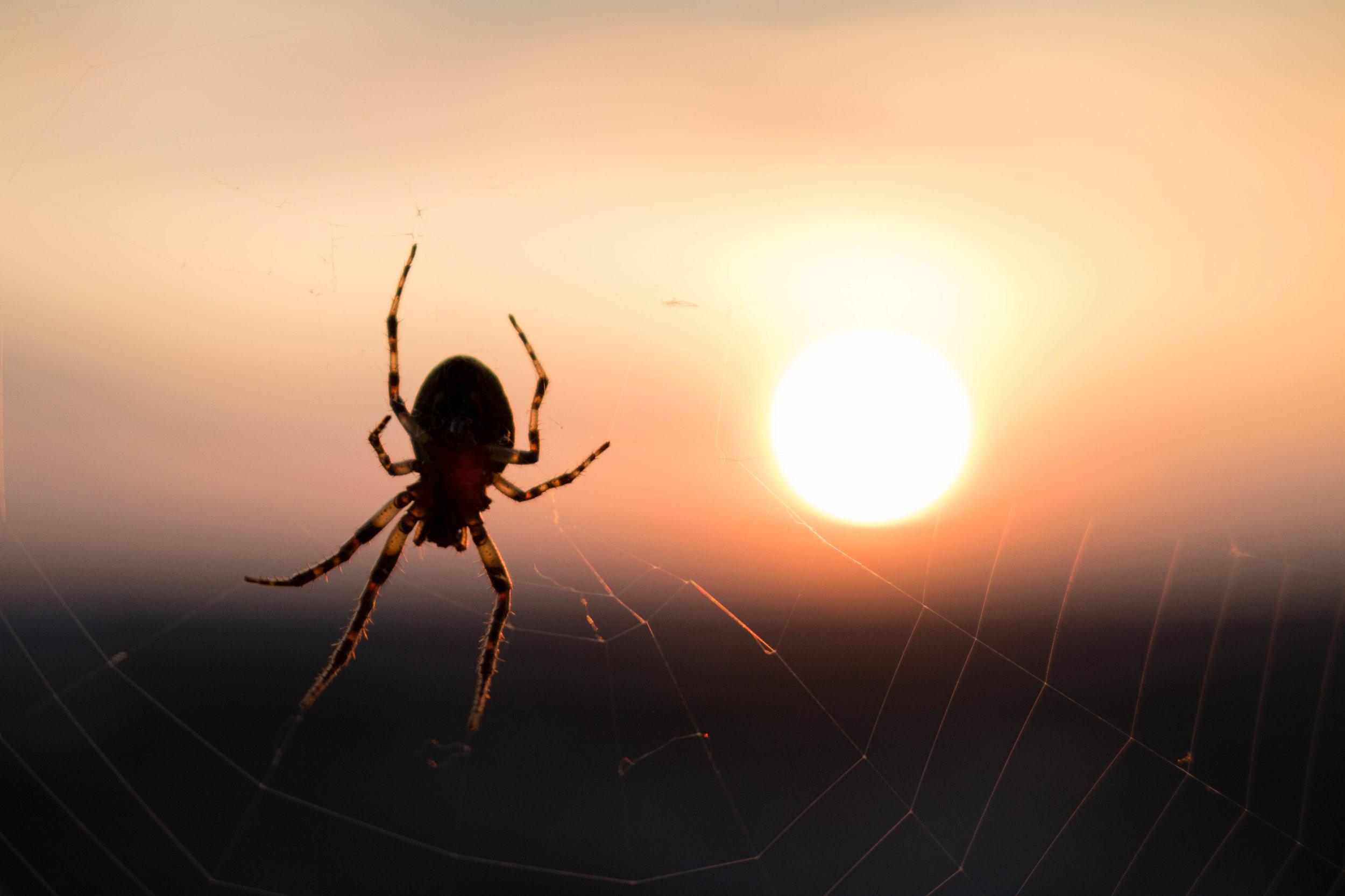 Spider-Sunset-Niagara-Falls-Canada-Photography