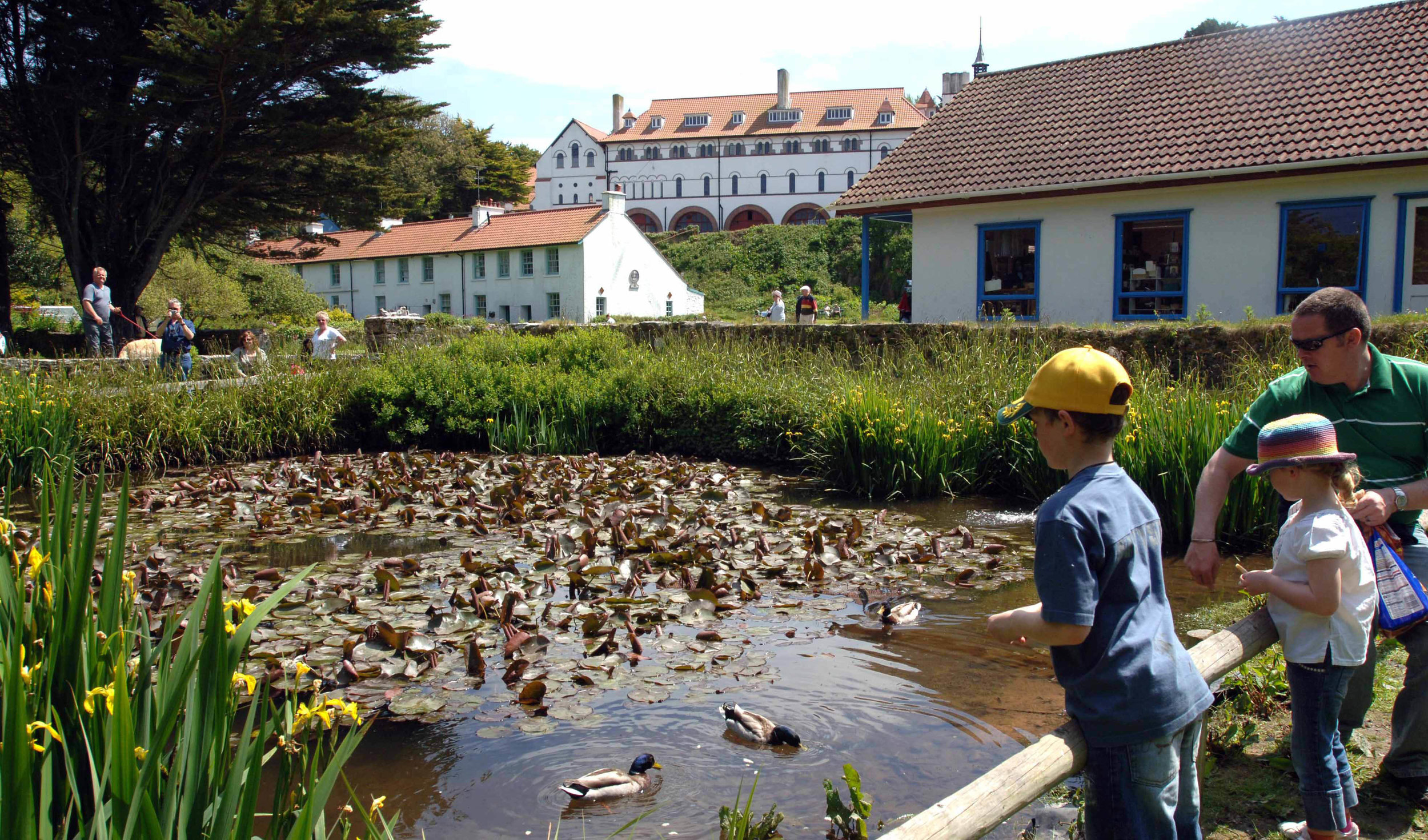 Caldey Abbey and ducks 2.jpg