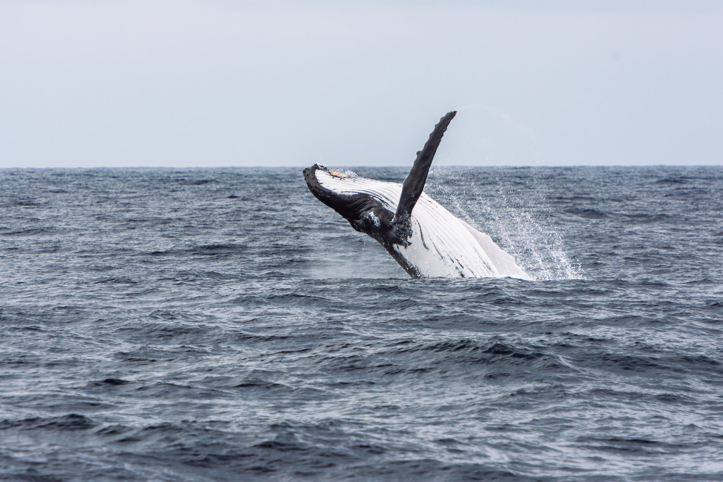 Whale watching with   Naturalist Charters