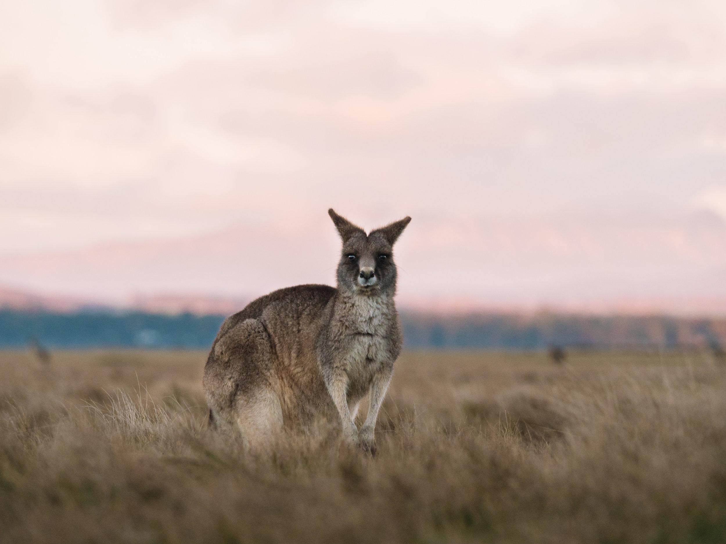 Narawntapu National Park, Bakers Beach, Tasmania
