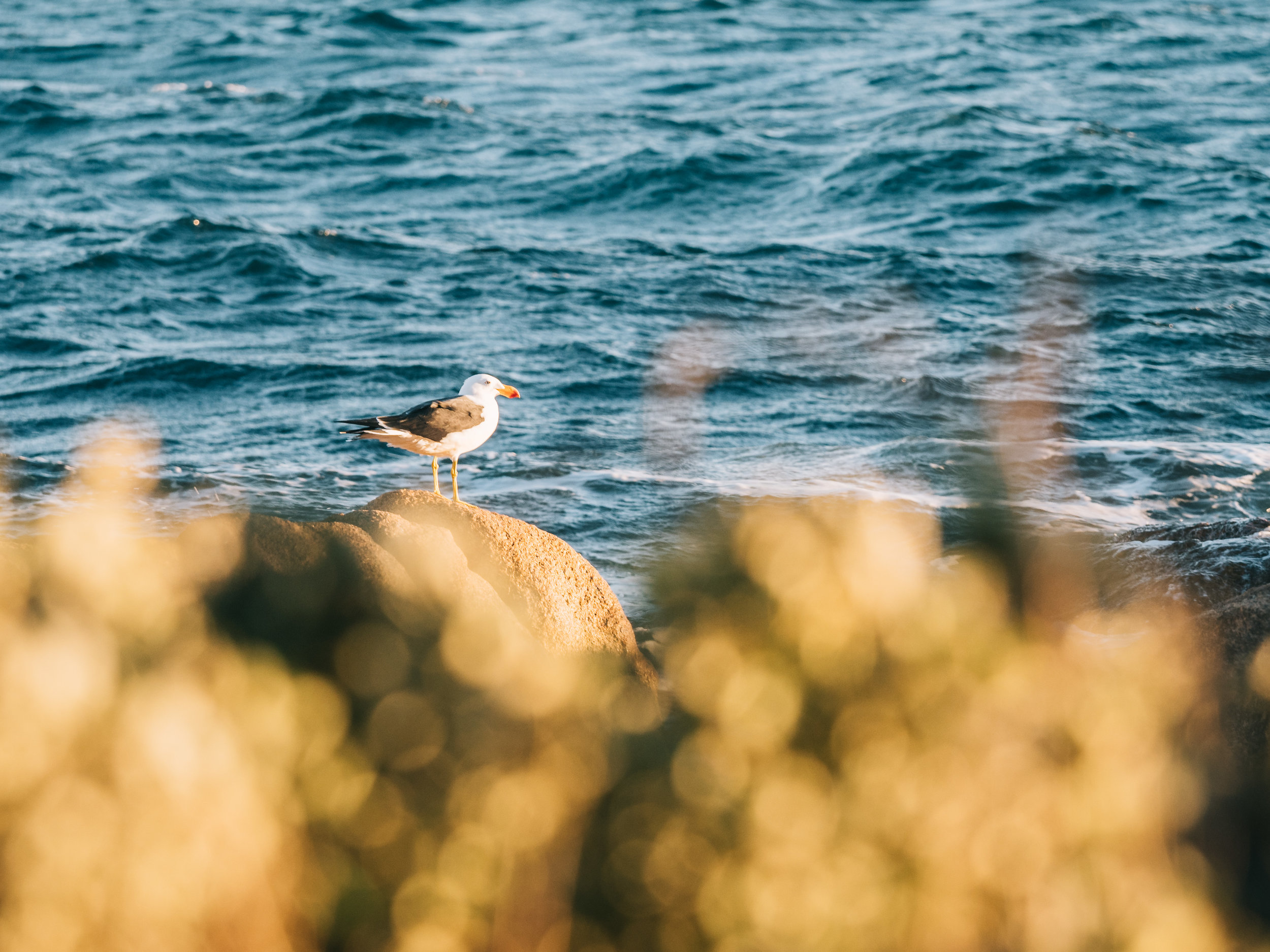 Coles Bay, Tasmania